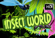 Insect-World-HD-Video Slots